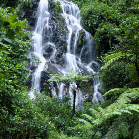 david-pluth-waterfall-cascading-over-rocks-in-a-lush-forest-setting