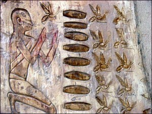 bees-egypt-heiroglyphs-300x225